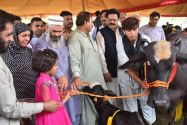 60 buffaloes were distributed among rural women