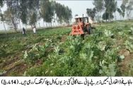 PFA ploughs 487 Kanal vegetables irrigated with sewerage water