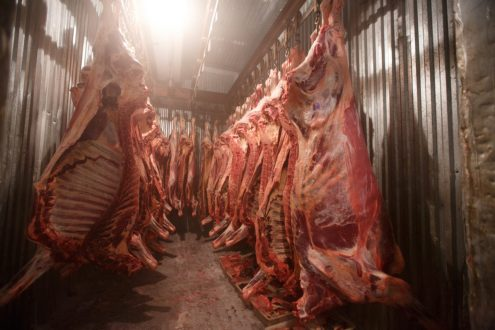 PFA sealed 41 meat shops for selling sick, emaciated chicken , beef and mutton