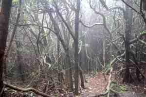 Elfin forest, Poas Volcano