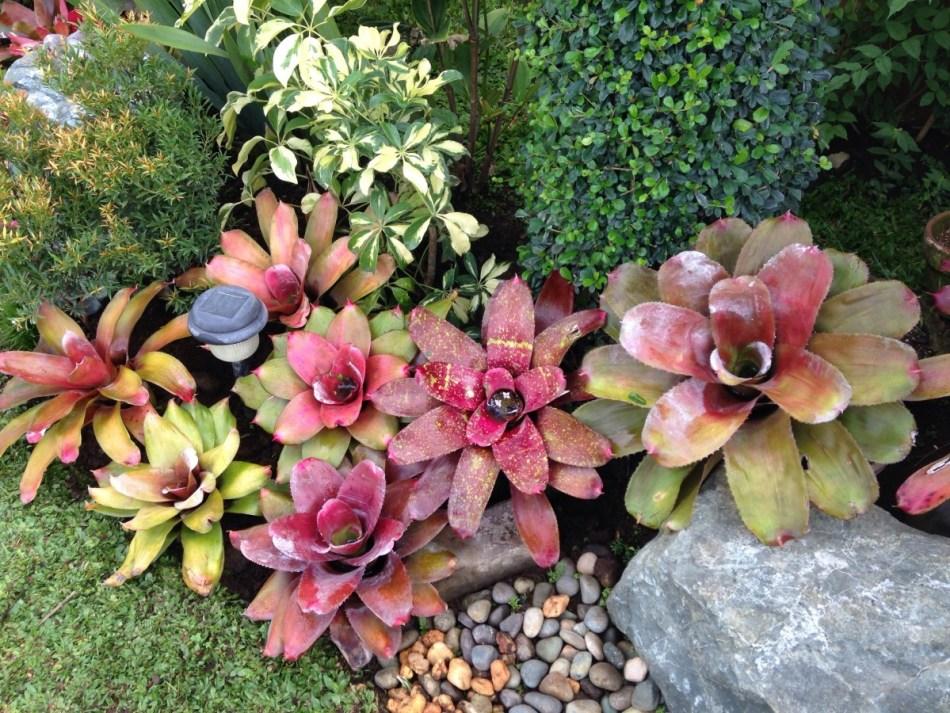 20180114I Bromeliads pxhere.com.jpeg