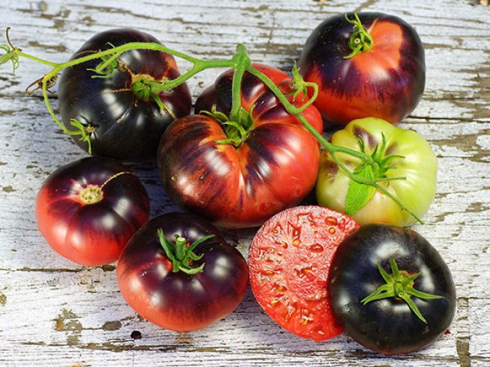 20180201C tomato-blue-beauty www.rareseeds.com.jpg