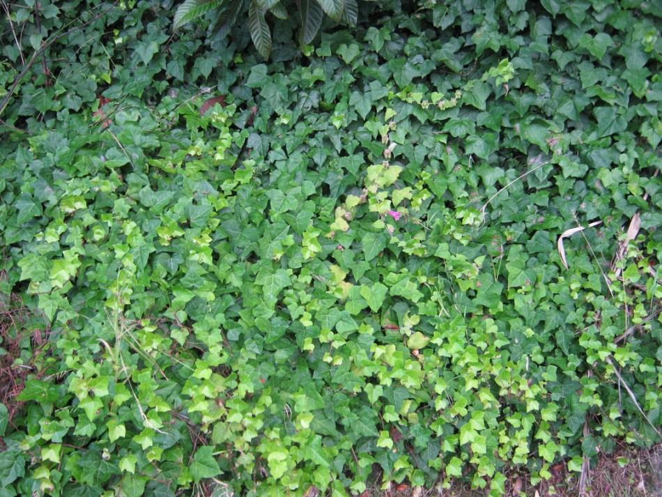 20180716A whangareiflora.weebly.com.jpg