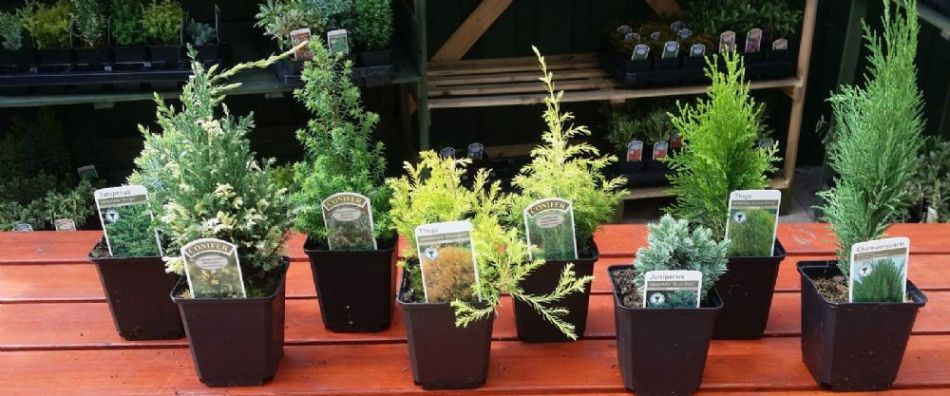 20180718D www.agecroftgardencentre.co.uk.jpg