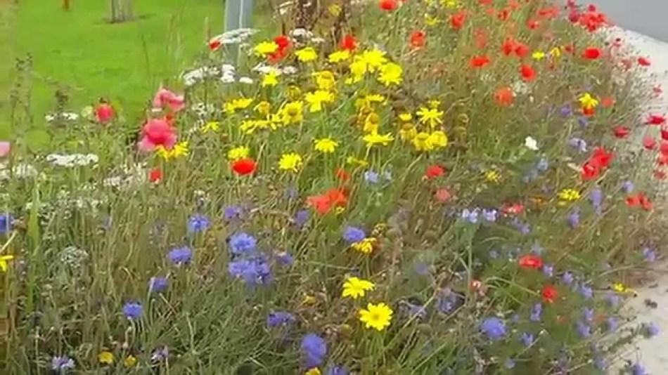 Seed bomb garden along sidewalk