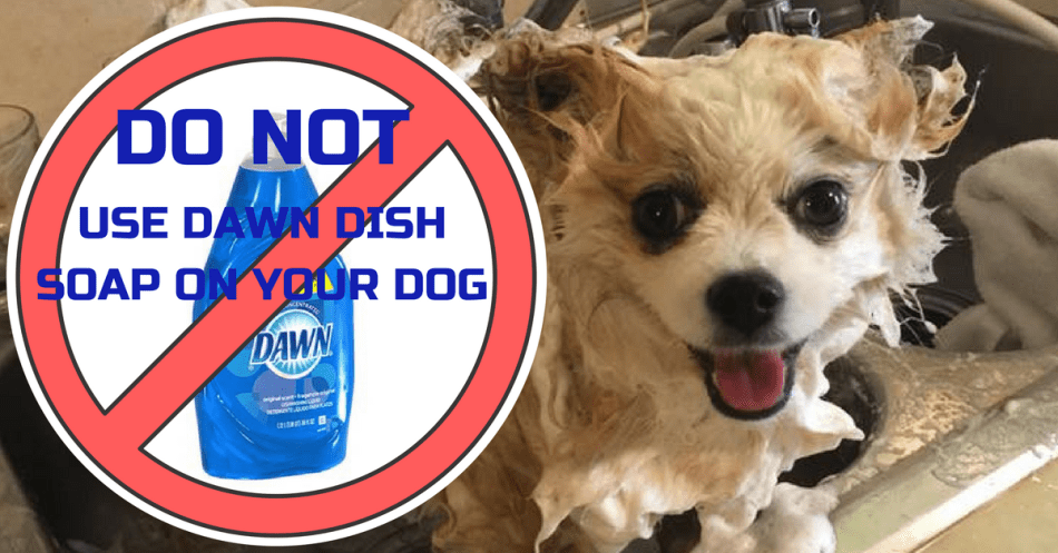 Dog being washed with superimposed warning label stating to not use Dawn dish soap on dogs.