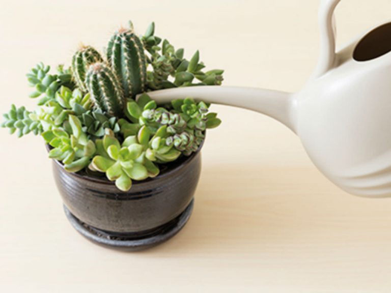 Watering can pouring water into pot of succulents.