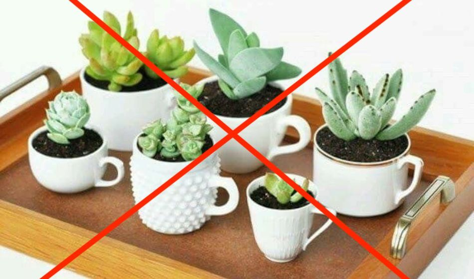 Succulents planted in teacups with no drainage hole. A red X points out the error.