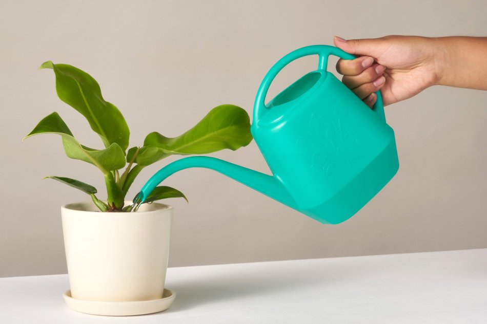 Watering can pouring water into pot.