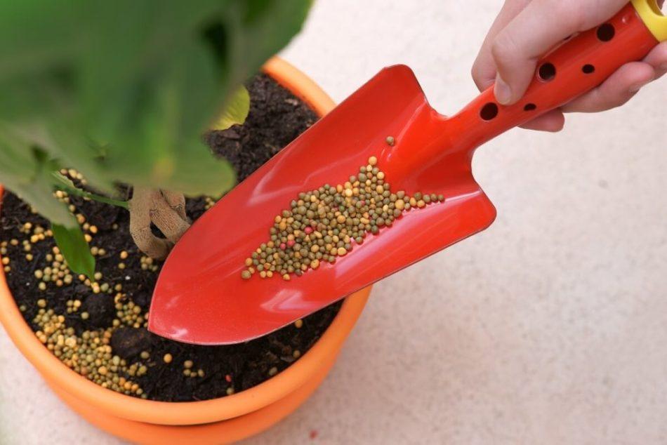 Fertilizer pouring into plant pot.