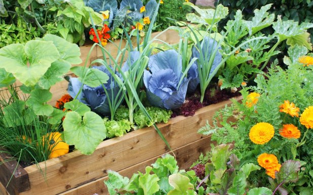 raised bed of vegetables