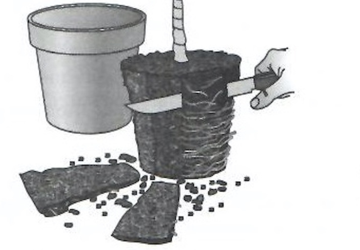 Illustration of knife cutting off slivers from the outside of a plant's root ball.