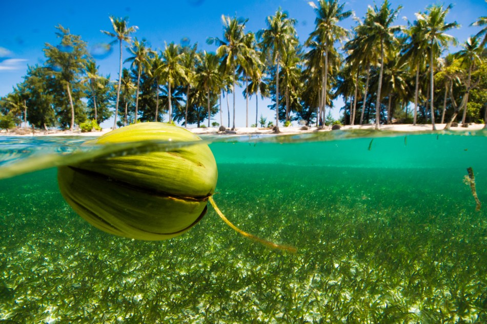 Coconut floating in front of a tropical island.
