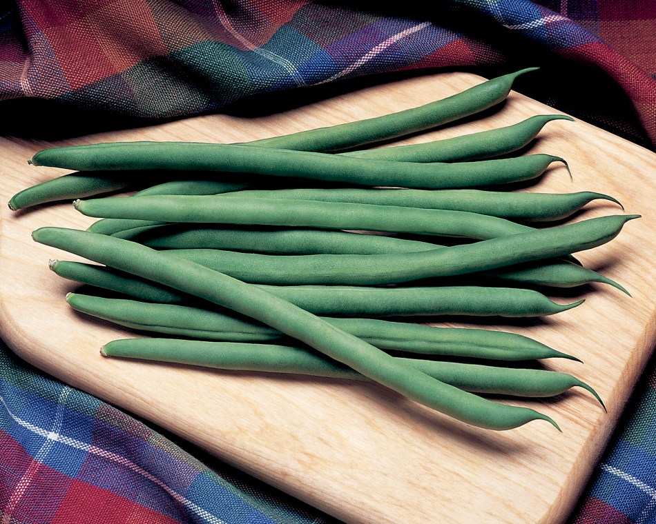 Harvested 'Kentucky Blue' pole beans, with long green pods.