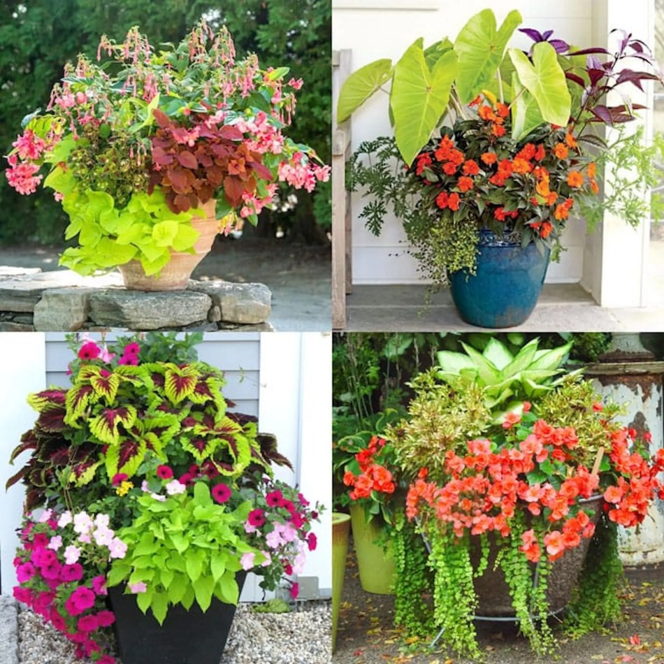 Container arrangements featuring plants grown from cuttings.