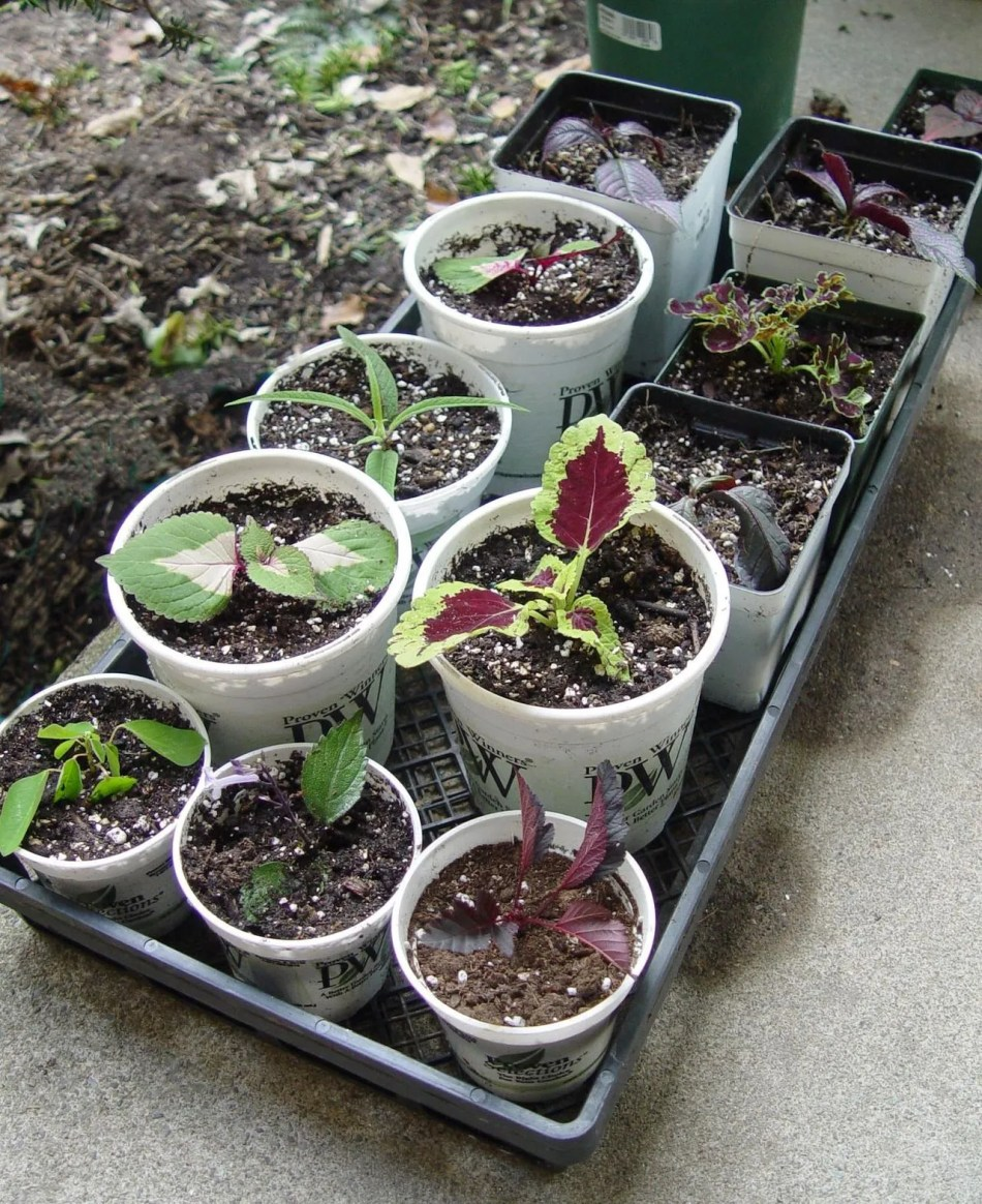 Different cuttings in a tray