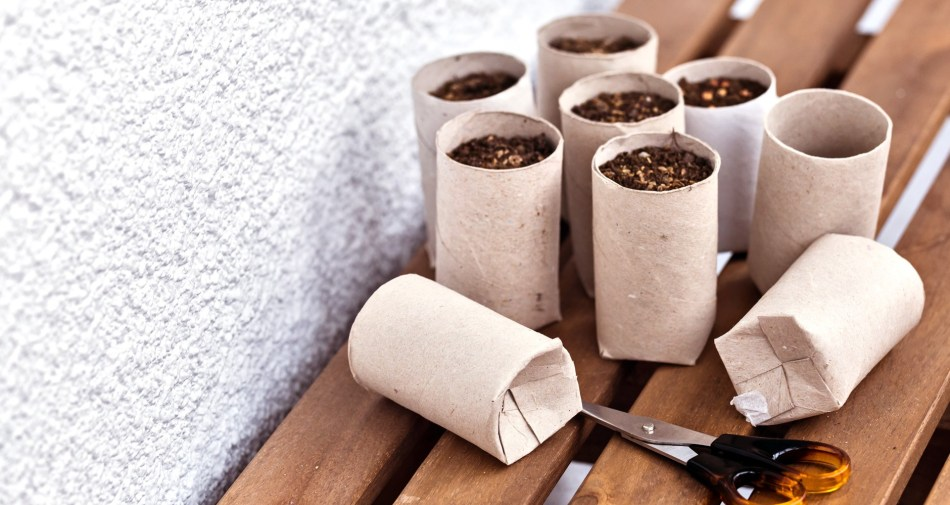 Toilet paper rolls converted into seedling pots.