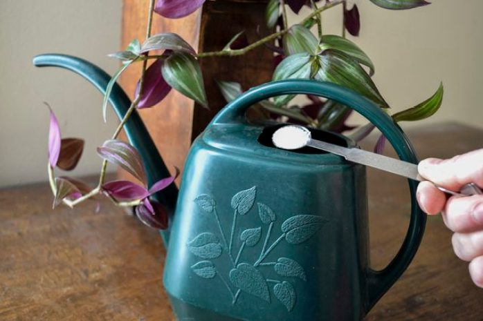 Spoonful of fertilizer being added to watering can.