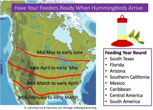 North American map showing dates when hummingbirds start to arrive.