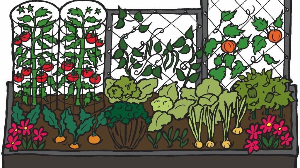 Illustration showing a raised vegetable bed.