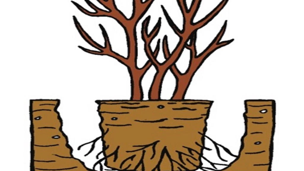 Planting showing root ball placed directly on soil at bottom of hole.