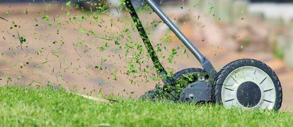 Manual mower leaving clippings in place.