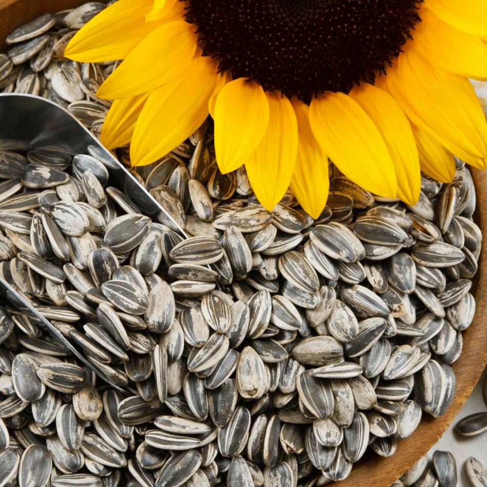 Unshelled sunflower seeds.