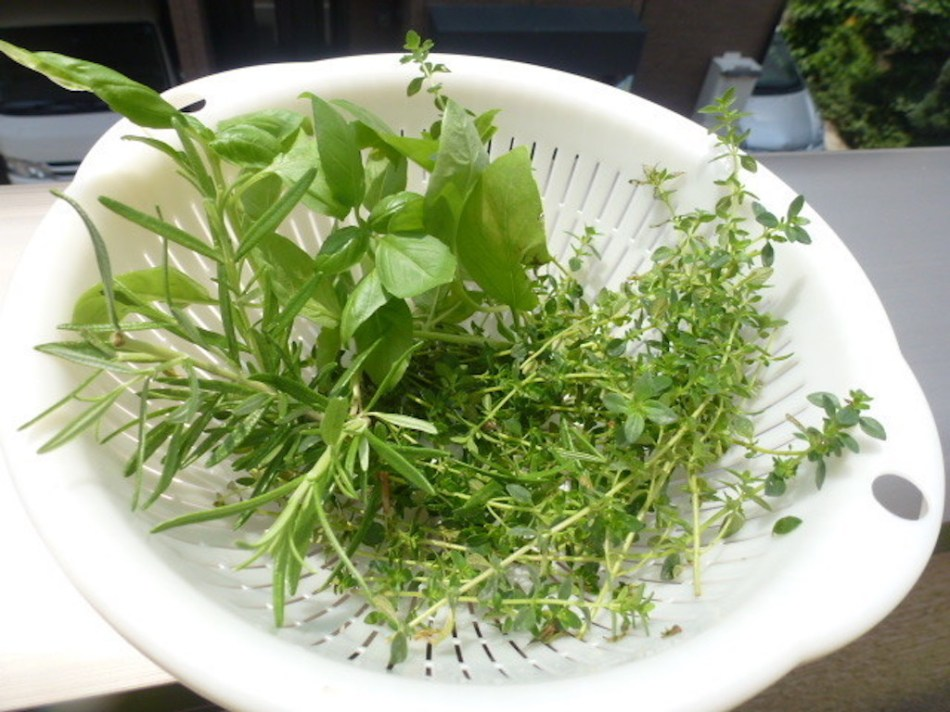 Fines herbes coupées dans une passoire.