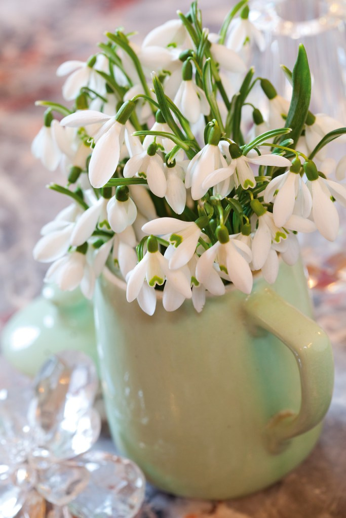 Snowdrops used as cut flowers in coffee mug.
