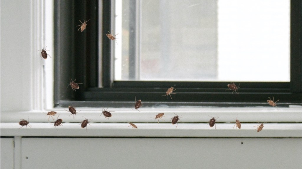 Brown marmorated stink bugs on a window ledge indoors.