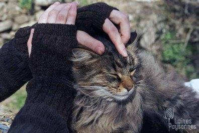 Laines Paysannes mitaines unies foncées en laines locales