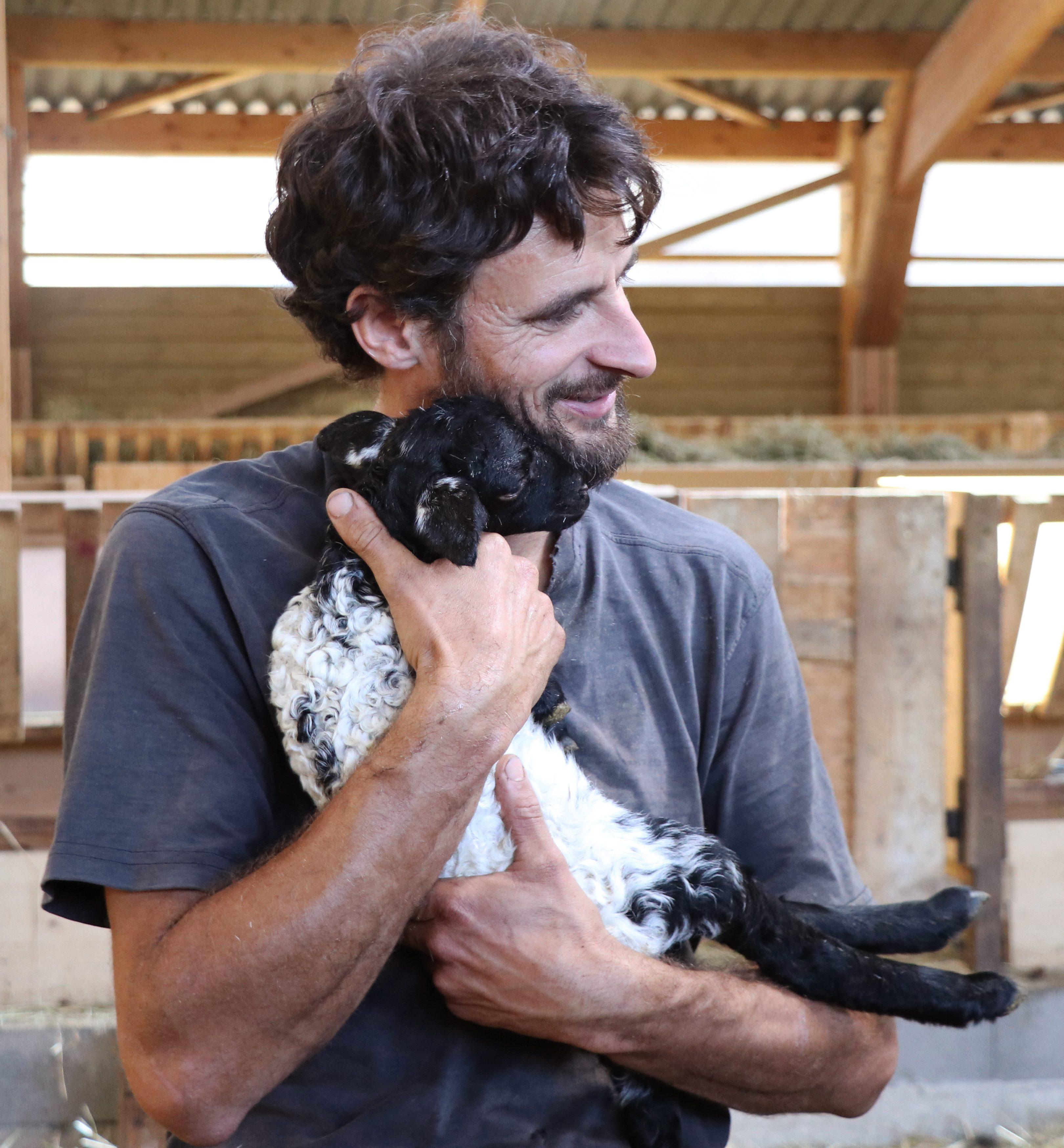 agneau et eleveur laines paysannes