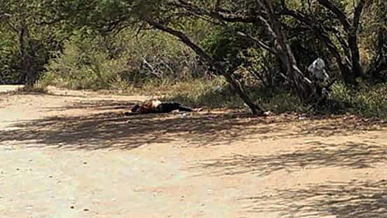 Asesinato en playa Pitahaya