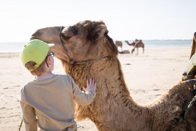 Essaouira kids friendly balade dromadaire