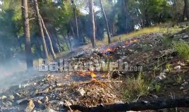 (VIDEO) Zjarri masiv në Kodër Krastë/ Ja si flakët shkrumbojnë pyllin në Elbasan