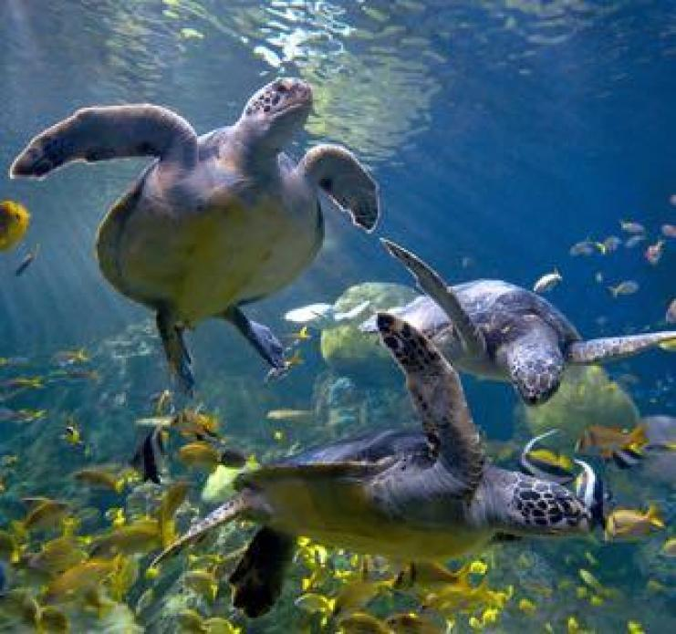 1605_sea-world-san-diego-la-jolla-turtles