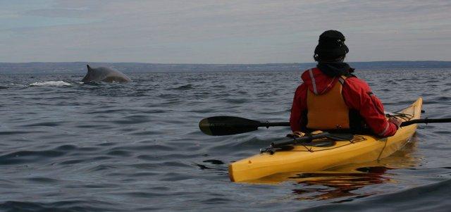 accueil-galerie-05-baleines-fjord-saguenay