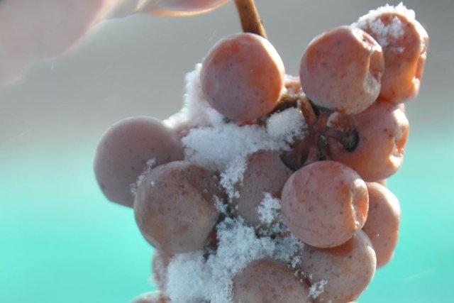 vin de glace-raisins