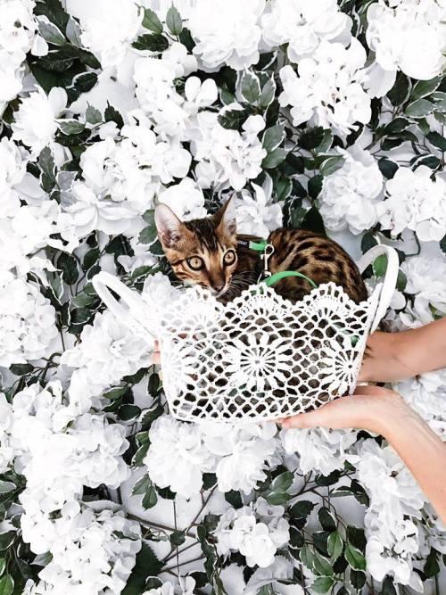 Maison Lavande, chat
