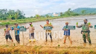 Photo of Curhat Petani Konawe : Harga Gabah Anjlok, Pupuk Subsidi Langka
