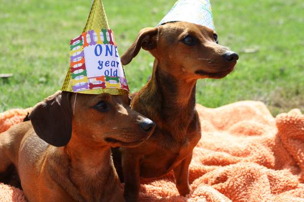 dog_birthday_party1