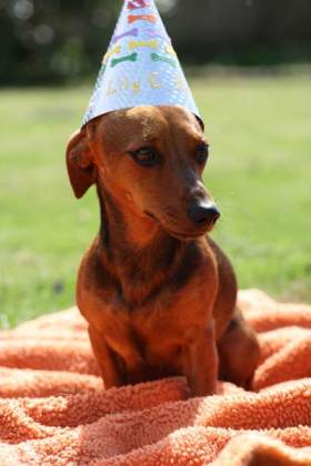 dog_birthday_party3