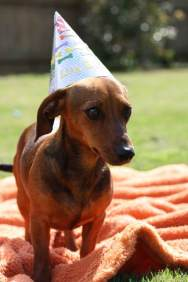 dog_birthday_party4