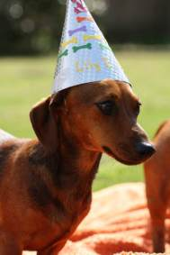 dog_birthday_party6