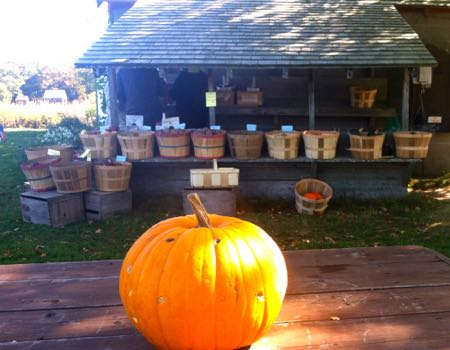 Muster Field Harvest Farm Stand