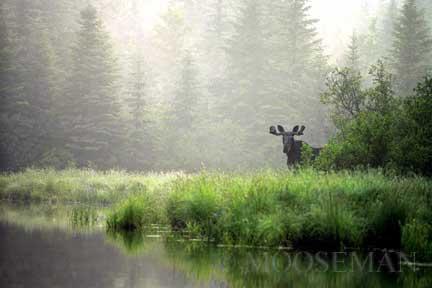 Peek-a-boo Moose by Rick Libbey