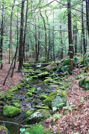 Stream crossing the John Hay Forest Ecology trail