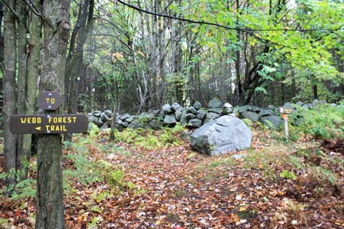 Junction of the Webb Forest Trail and the Wolf Tree Trail