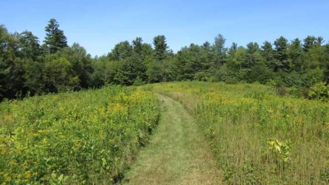 Knight's Hill Nature Park Field Path