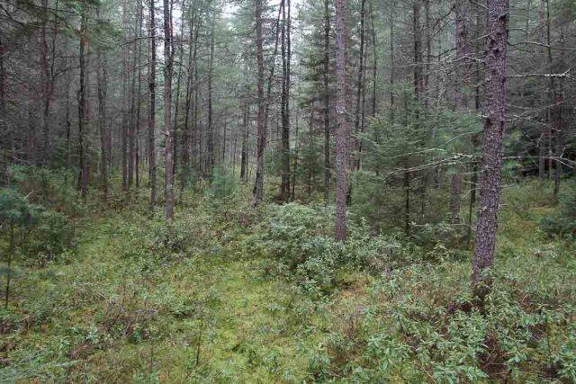 Coniferous Bog